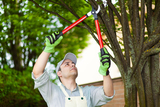 Profile Photos of Top Tree Service Seattle