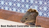 New Album of Rodent Control Adelaide