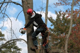 Profile Photos of Tree Cutting And Trimming NYC