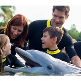 New Album of Orlando Swim with Dolphin Tickets and Tours