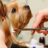 St. Charles Mobile Pet Groomers
