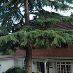 Complete Tree Care