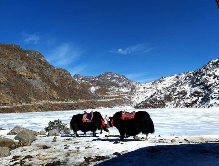 New Album of SILK ROUTE TOUR SIKKIM PACKAGE PREMIUM STAYS 54 Ho Chi Minh Sarani - Photo 1 of 5