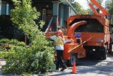 Big Easy Tree Removal, New Orleans