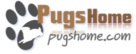 Profile Photos of Pugs Home 13205 Fieldgate Dr - Photo 1 of 2
