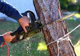 Tree Lopping Services Melbourne at Green Kings Landscaping, Green Kings Landscaping, Tarneit