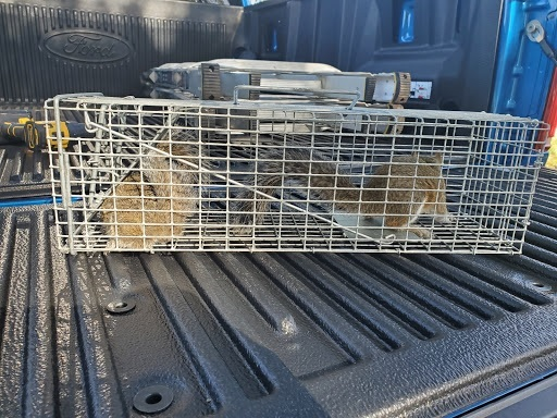 Profile Photos of Wildout Animal & Pest Removal Tampa 13815 Cypress Village Circle - Photo 4 of 4