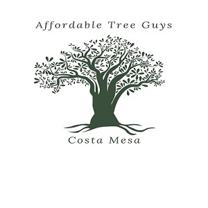 Profile Photos of Affordable Tree Guys of Costa Mesa 1695 Palau Place - Photo 1 of 3