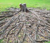 Thorough Tree Root Removal Services , Burlington Tree Care & Removal Service, Burlington
