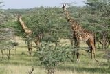 Profile Photos of Destinations Africa - African Wildlife Tours - Travel Packages