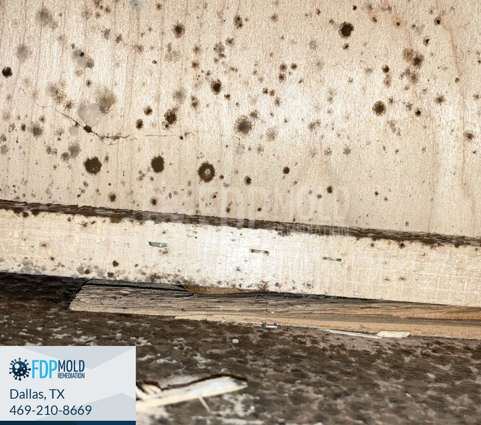 New Album of FDP Mold Remediation 2611 Ross Ave - Photo 6 of 6