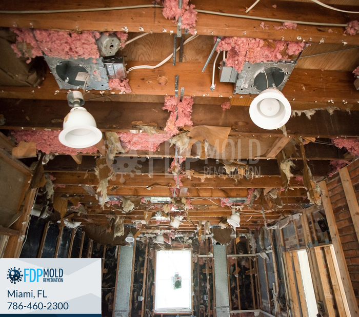 New Album of FDP Mold Remediation 240 N Miami Ave - Photo 1 of 4