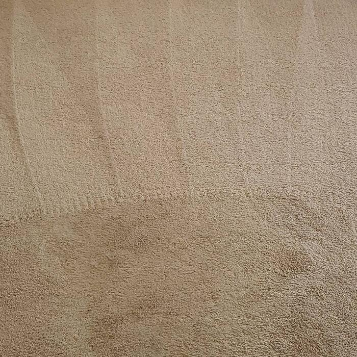 New Album of Carpet Cleaning Ypsilanti 8540 Glendale Dr - Photo 3 of 4