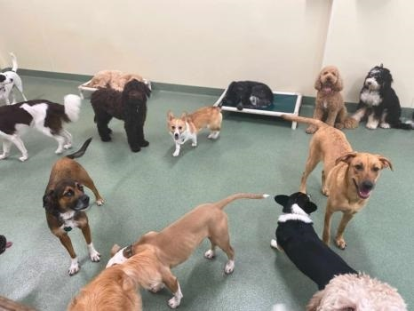 Profile Photos of PUPS Pet Club 1624 West Division Street - Photo 2 of 4