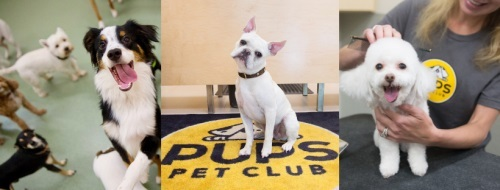 Profile Photos of PUPS Pet Club 1624 West Division Street - Photo 4 of 4