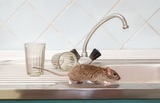 Victorville Pest Control Solutions, Victorville