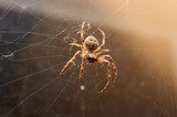 Spiders Control