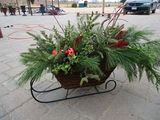 New Album of Carousel Floral Gift and Garden Center - Broadway