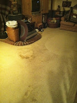 Profile Photos of Organic Dry Carpet Cleaning