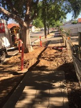 Profile Photos of Tree Removal Service Adelaide
