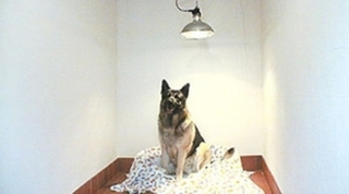 Dog grooming parlour in chester and ShrewsBury - Park Lane Kennels, UK