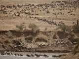 Profile Photos of Smart Travel and Safaris Africa