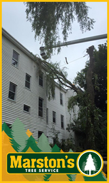 Clearing downed tree from apartment building. Maine Arborist service - Marstons Tree Service Inc.