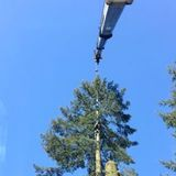 Profile Photos of Tree removal service