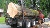 Servicing the greater Toronto area for over a decade on all tree related services from cutting down to fully reoving unwanted trees.