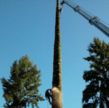 Dead Or Alive Tree Service, Olympia