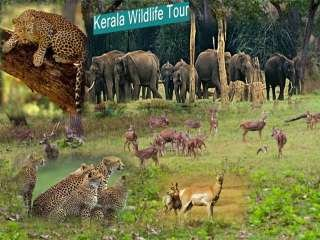 Kerala Travel Packages India