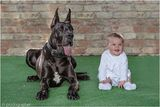 New Album of Protection Dogs Worldwide