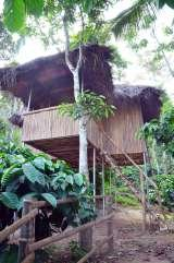 Profile Photos of wayanad jungle tree house near muthanga forest .best place to stay in wayand