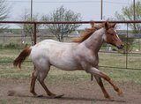 Profile Photos of Classic Touch Stables