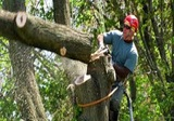 Simple Leaf Tree Care, Dripping Springs