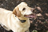 Profile Photos of DogWatch of Central Florida