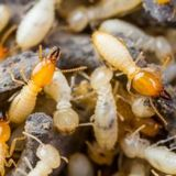 Profile Photos of Integrated Pest Management