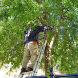 Fayetteville Tree Care Services