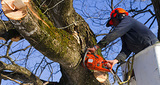 Profile Photos of Lincoln Tree Service