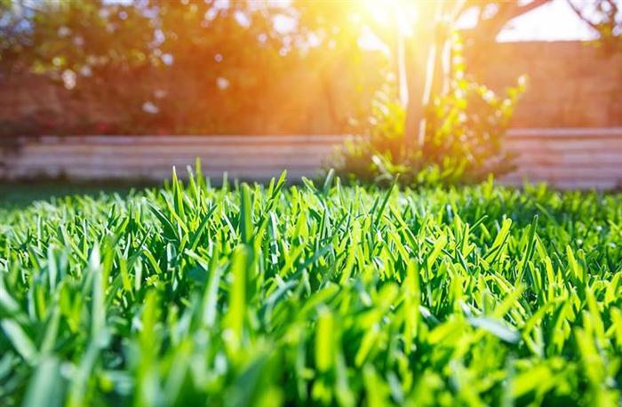 Profile Photos of Mighty Green Lawn Care 1809 Riverchase Drive #361121 - Photo 3 of 4