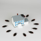 On The Go Pest Services in Washington