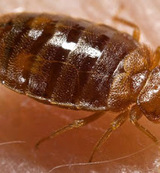Reliable Bed Bug Removal Service NJ, Holmdel