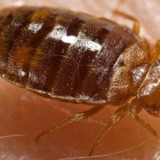 Reliable Bed Bug Removal Service NJ