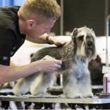 Orlando Mobile Dog Grooming