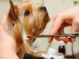 Handsome Hounds and Pretty Pouches, Dog Grooming Kings Lynn Norfolk Pet Groomers Downham Market West Norfolk and local area. Call - 01553 811131