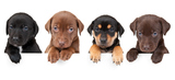 Profile Photos of Canine Creations Pet Salon and Spa